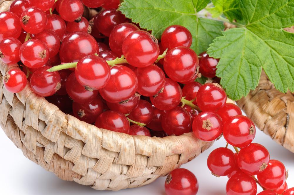 Полезные свойства красной смородины: как применять ягоды и листья
