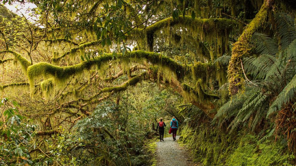 Прогулка по Новой Зеландии