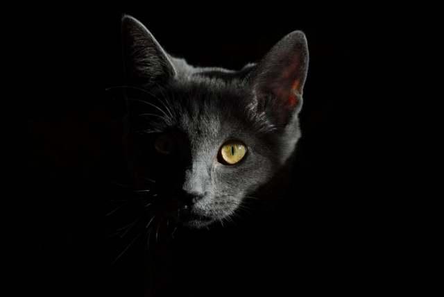 Кошки – это самые магические существа на Земле.