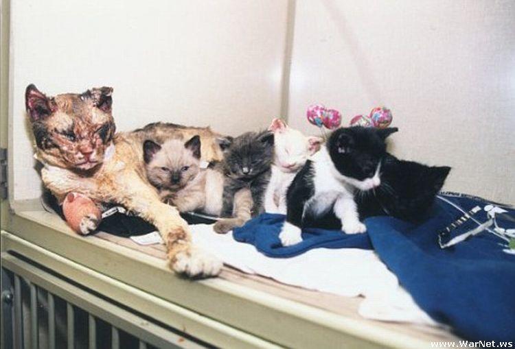 Кошка 5 раз заходила в горящий дом, спасая котят! 5 птиц, которые опасны для человека