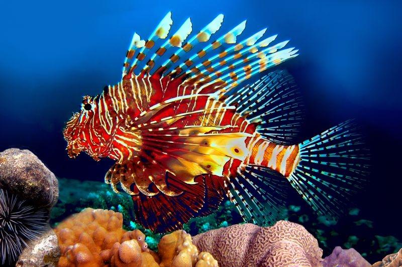 Яркие краски подводного царства