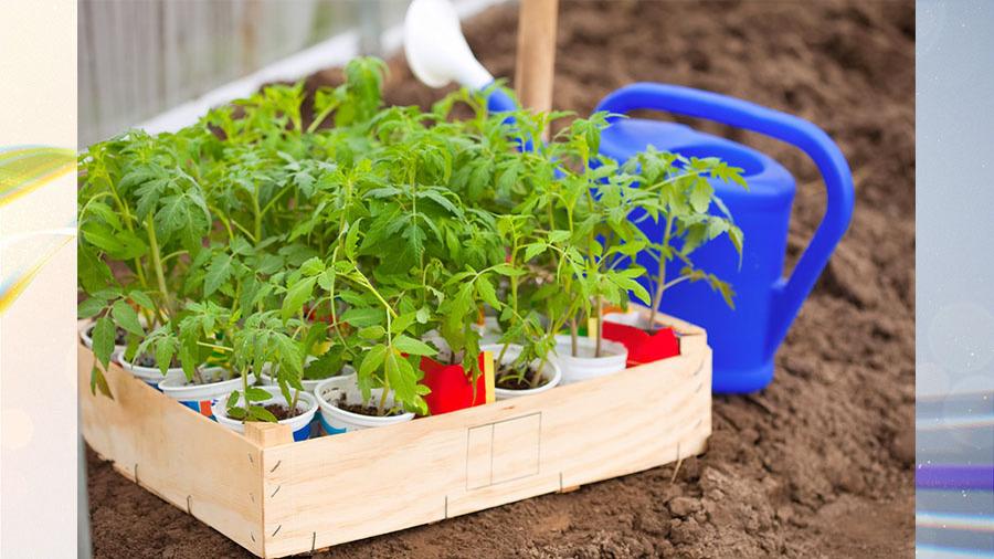 Что сажать в апреле из овощных культур?