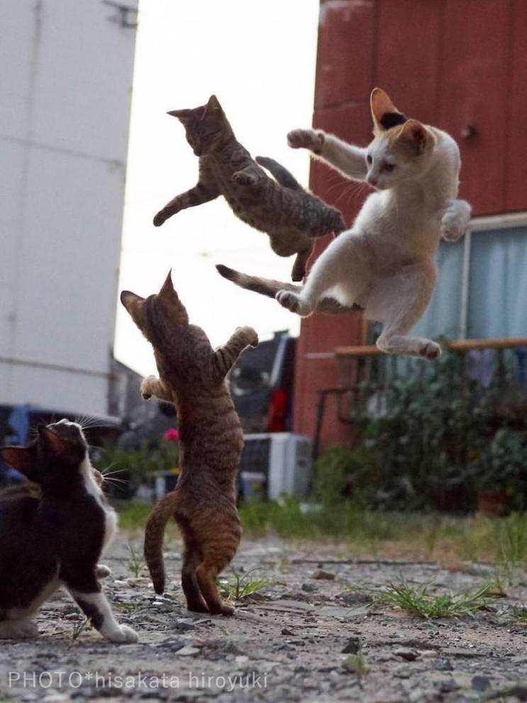 Спасайся, кто может: кошки-ниндзя наступают