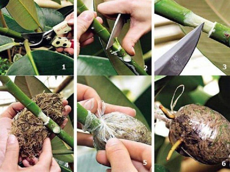 Уникальный способ размножения деревьев и кустарников.