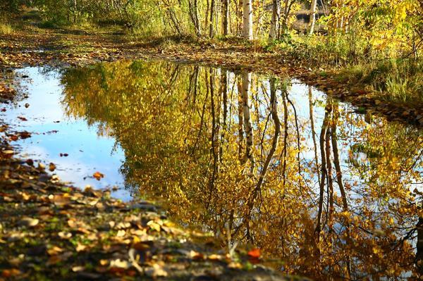Что сентябрьские березы нам про будущую весну расскажут?