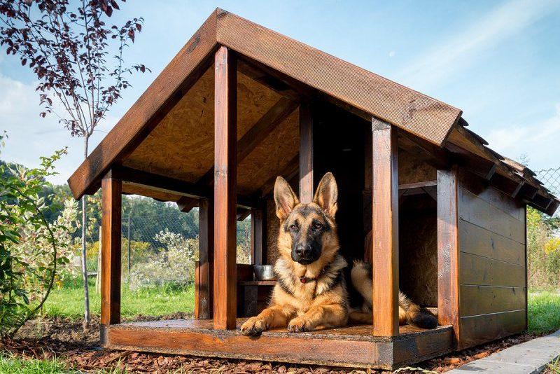 Будка для собак своими руками: чертежи, новые идеи и лучшие примеры от пользователей
