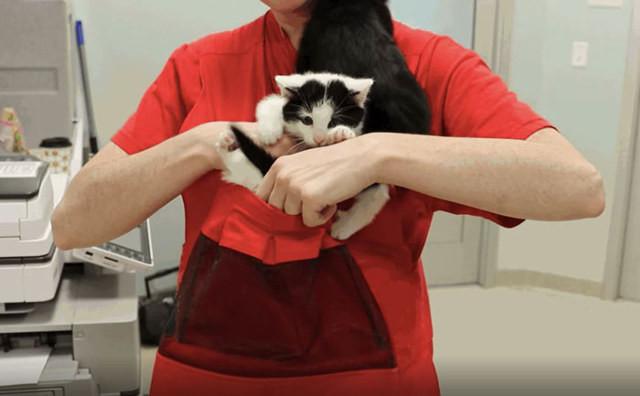 Супер-изобретение которое позволяет приручить дикого котенка всего за 48 часов