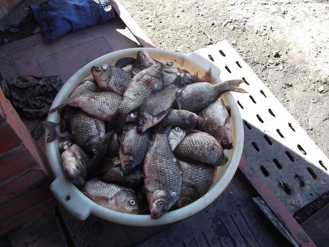 Новая рыбацкая хитрость — манная жвачка