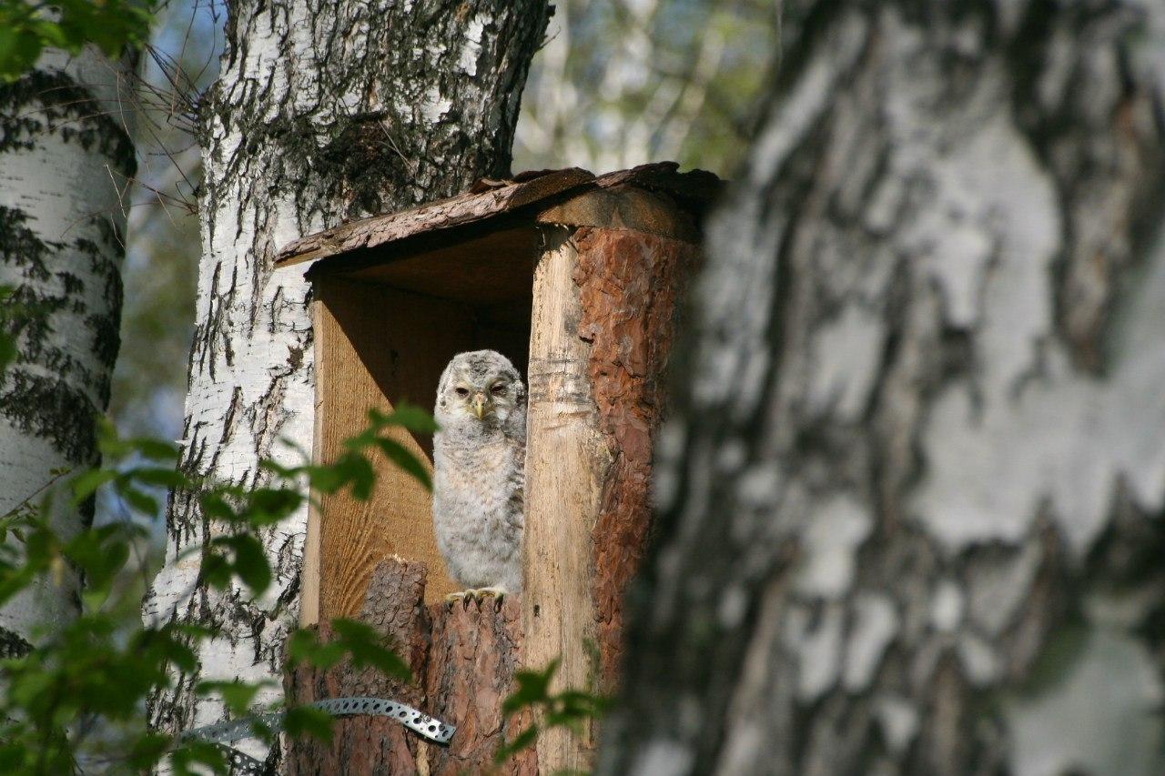Домик для совы или как сделать совятник своими руками