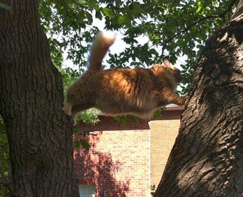 Смешные фотографии с кошками, заставляющие засомневаться в их умственных способностях