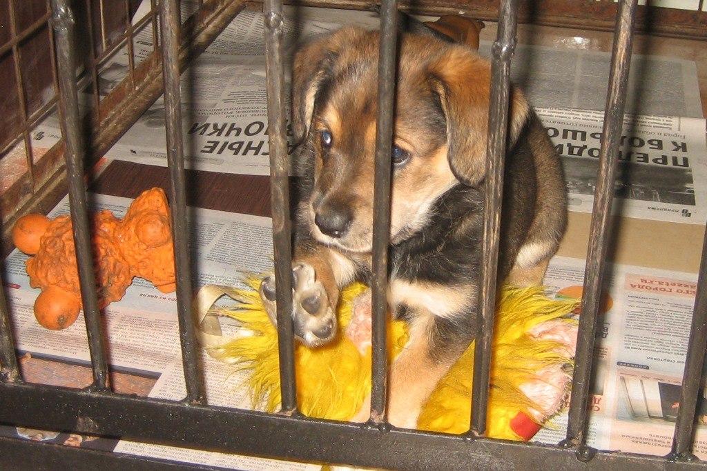 Месячный щенок хотел играть с людьми и другими животными
