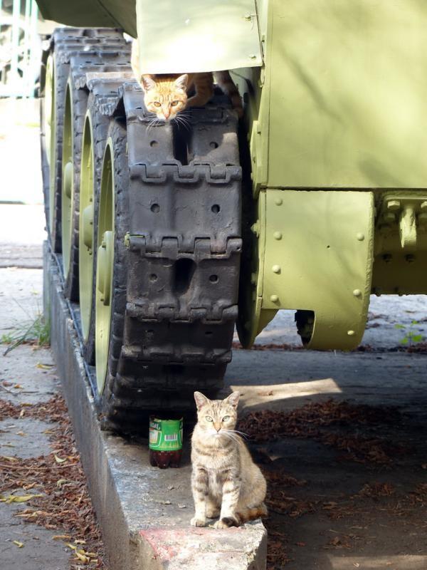 Прикрытие с воздуха бронетехника, животные, коты