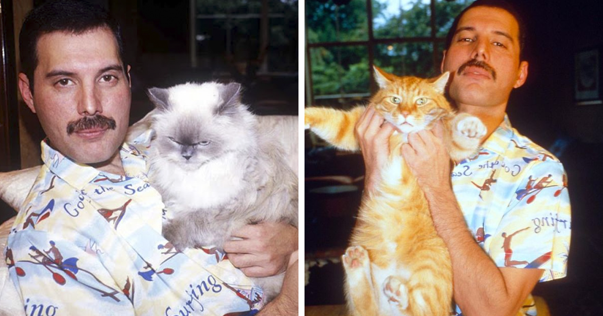20 Vintage Photos Of Freddie Mercury And His Beloved Cats