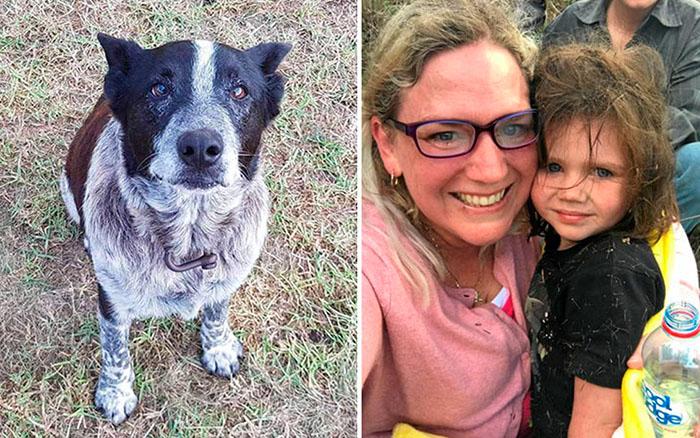 Старая глухая и полуслепая собака спасла маленькую девочку, потерявшуюся в лесу