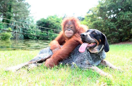 Дружба среди разных видов животных