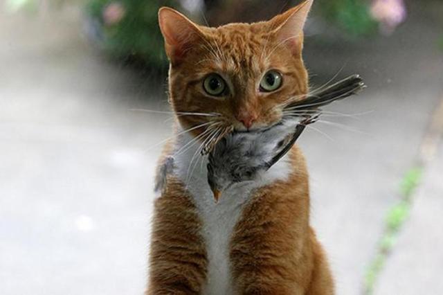 Когда твой кот —  мастер нах…