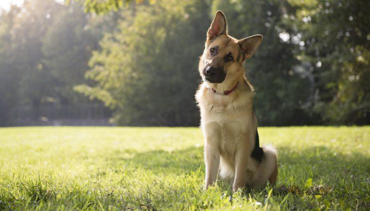 Гениальный пёс