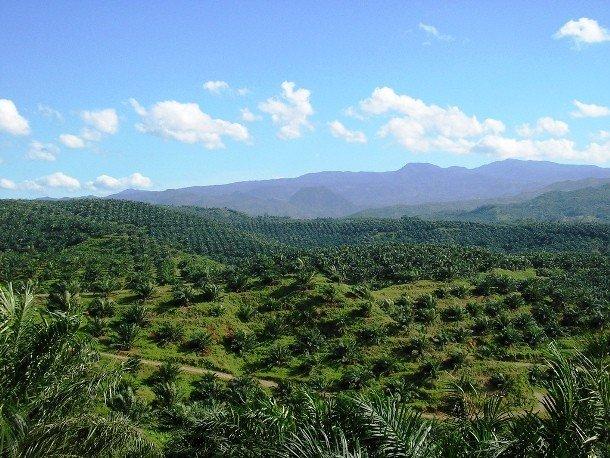 Шокирующие и печальные факты про пальмовое масло