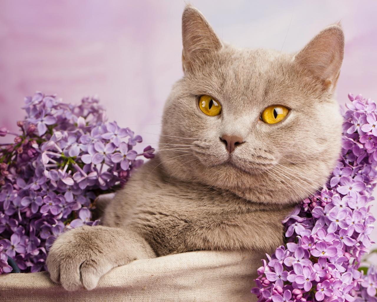 1 марта - День Кошки в России