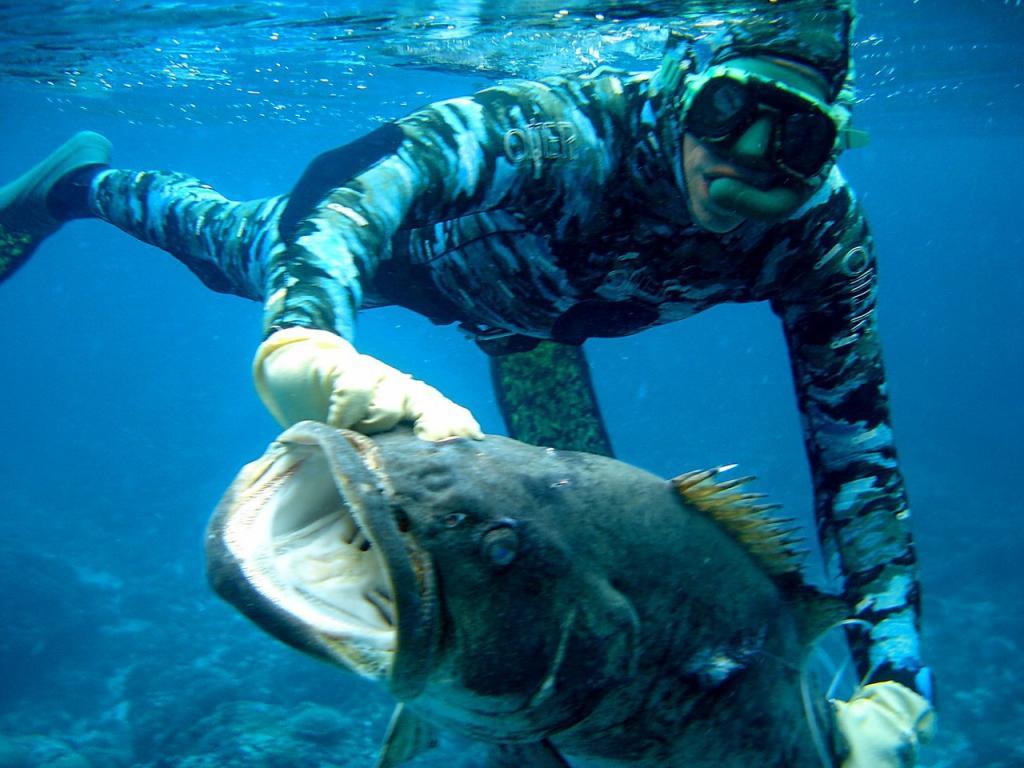 Как проводится подводная охо…