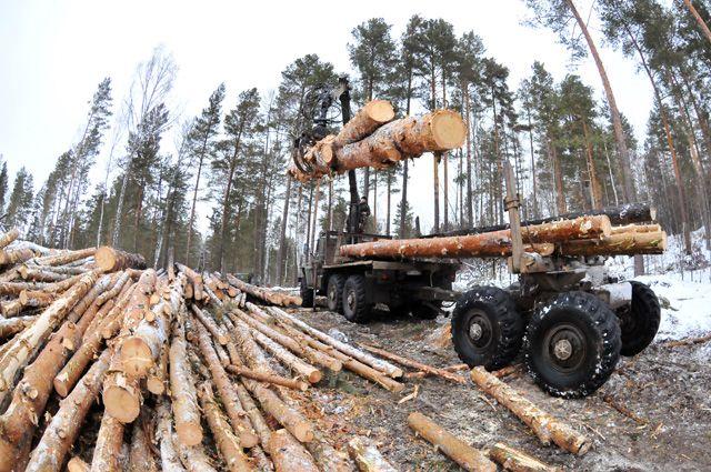 Вводить ли запрет на вывоз леса в Китай?
