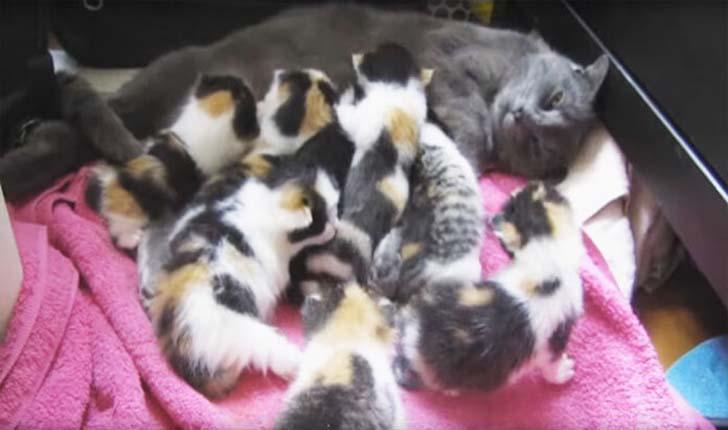 Люди спасли эту маму-кошку и ее 8 котят