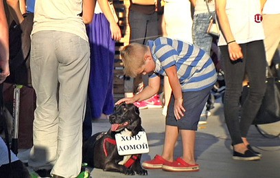"""Спасенные из приюта """"Эко Вешняки"""" собаки ждут хозяев в Останкинском парке"""