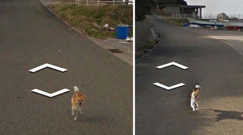 В Японии собака проследовала за автомобилем Google Street View, забавно «испортив» каждую сделанную им фотографию