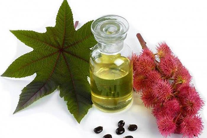 Лечебные растительные масла. Касторовое масло