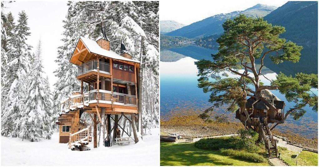 25 удивительных домов на деревьях, раскиданных по всему миру