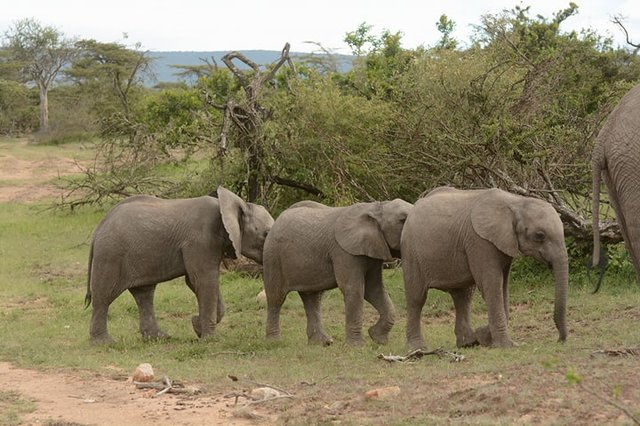12-elephant-mother-and-her-grieving-children