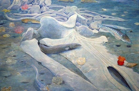 В Новой Зеландии обнаружили новый вид китов. Вымерших