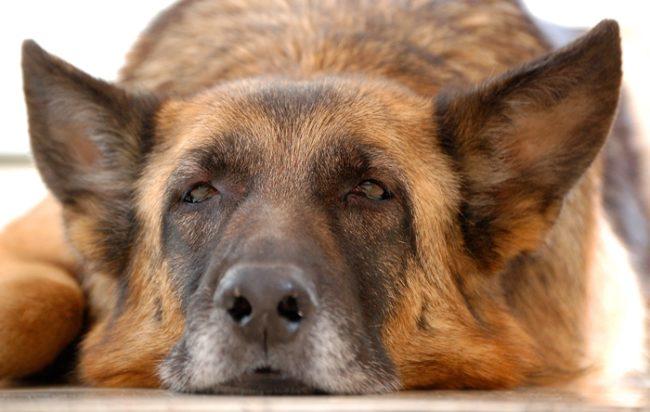 «Последняя собака» —  трогательная история о человечности