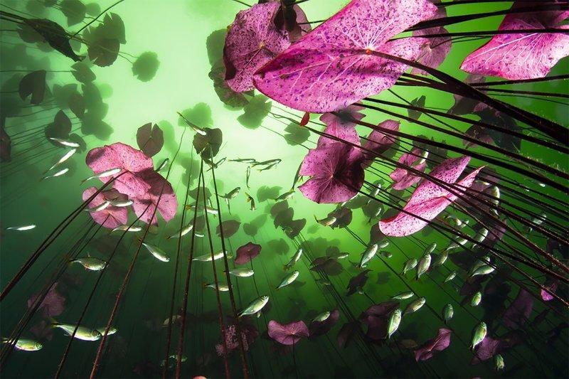 """""""Взгляд из-под воды"""", Кристиан Визл Wildlife Photographer of the Year, животные, конкурс, мир, под водой, природа, фотография, фотомир"""