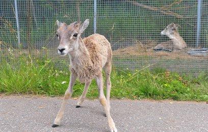 Редкие обитатели Московского зоопарка обзавелись потомством