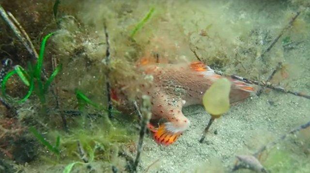 Редкая рыба с ногами