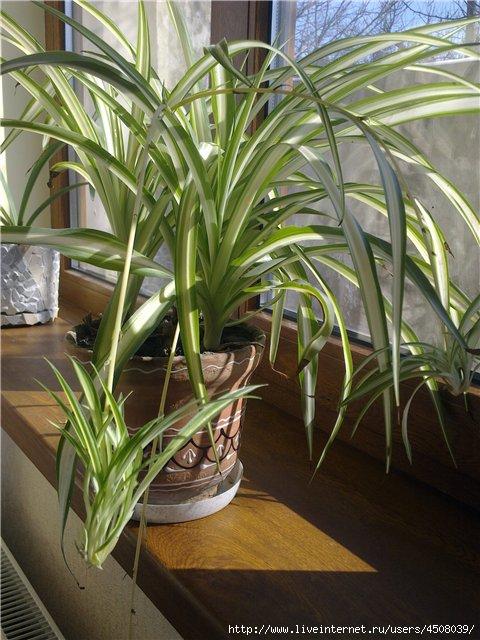 ЗДРАВОТДЕЛ. Удивительная польза комнатных растений