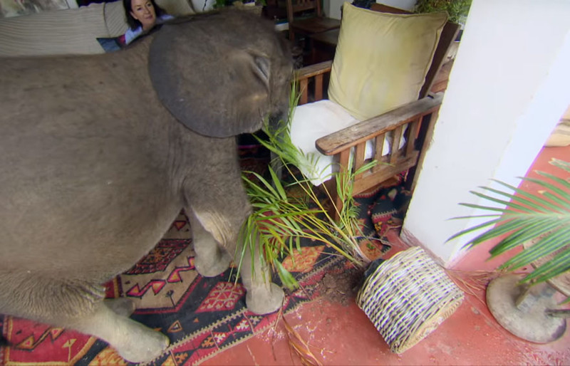 Какой сильной... животные, слоненок