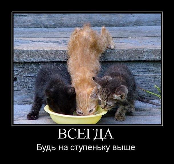 Подборка кошачьих фотографий с забавными надписями.)