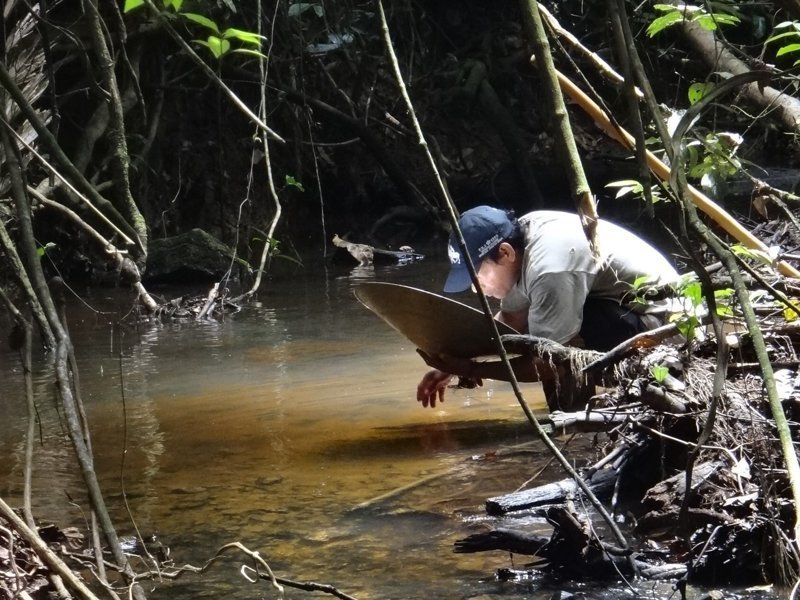 Поиск золота в джунглях