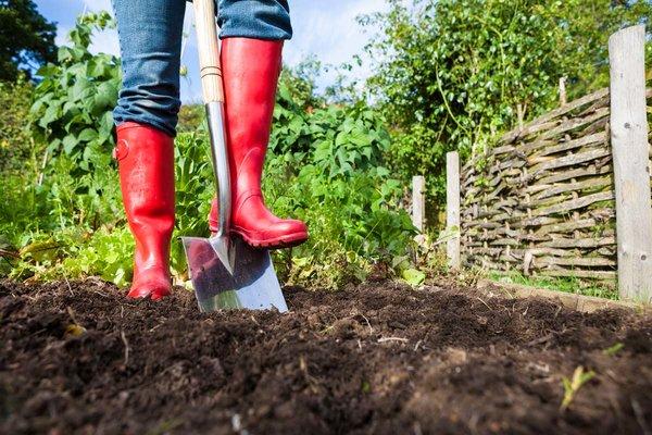 Убирайте остатки урожая во время перекопки огорода   Сад-огород