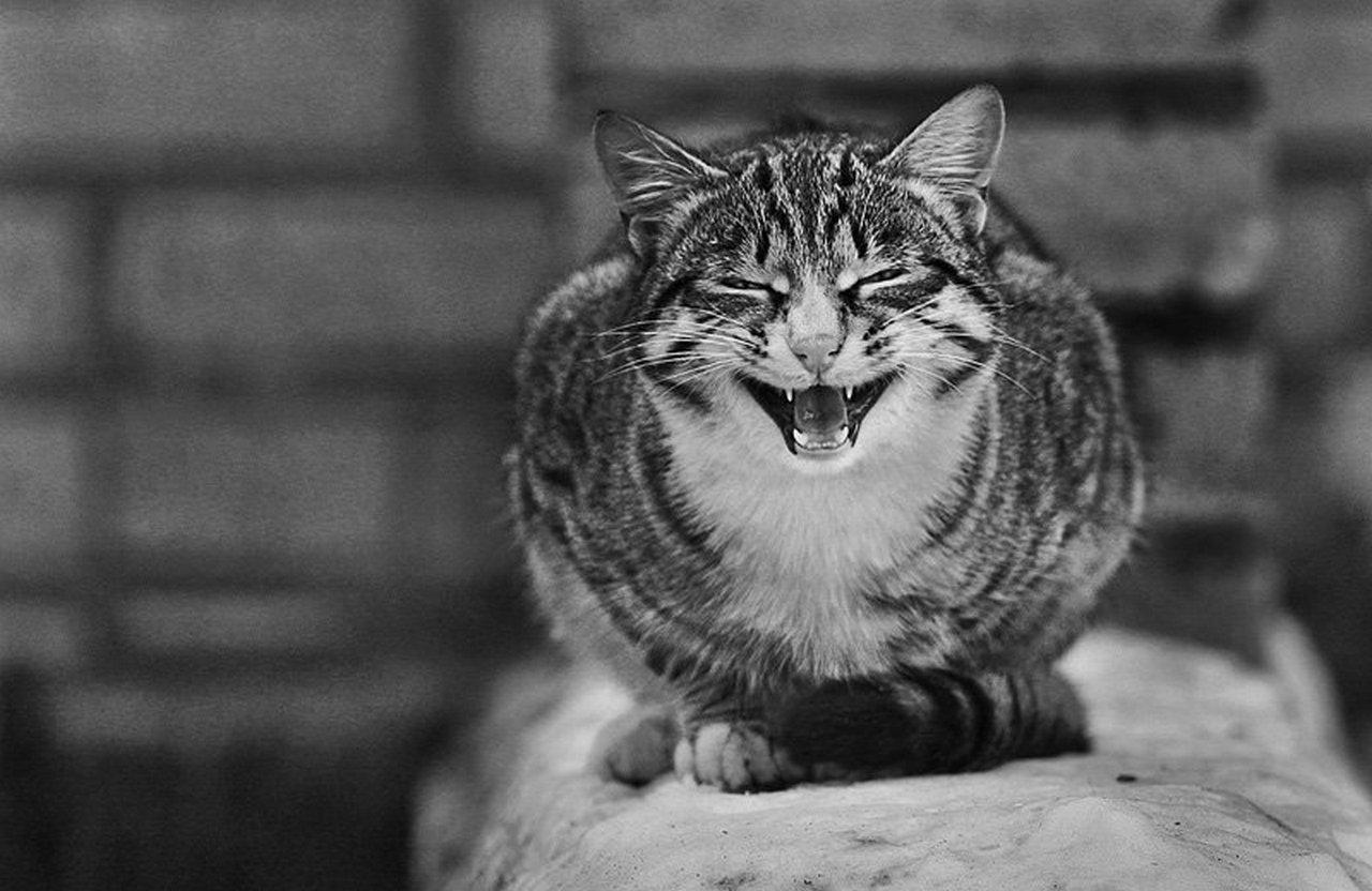 Люси Дикерсон: даже если сбежавший кот Скрипалей даст показания, Терезе ничего не поможет…