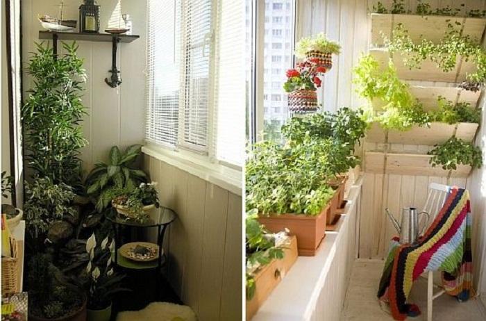 Озеленение балкона от а до Я, цветник на балконе своими рука.