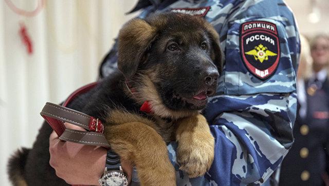 Собаку Добрыню, подаренную Франции, признали непригодной к службе