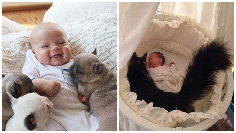 20 примеров того, как питомцы реагируют на появление малыша в доме