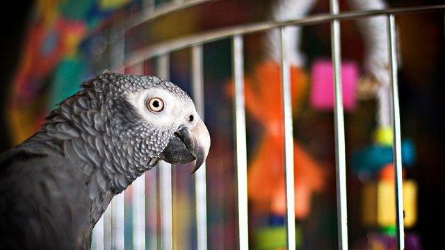 Попугай в ярости: птичка увидела, как сломали ее клетку. Таких слов даже я не знаю!