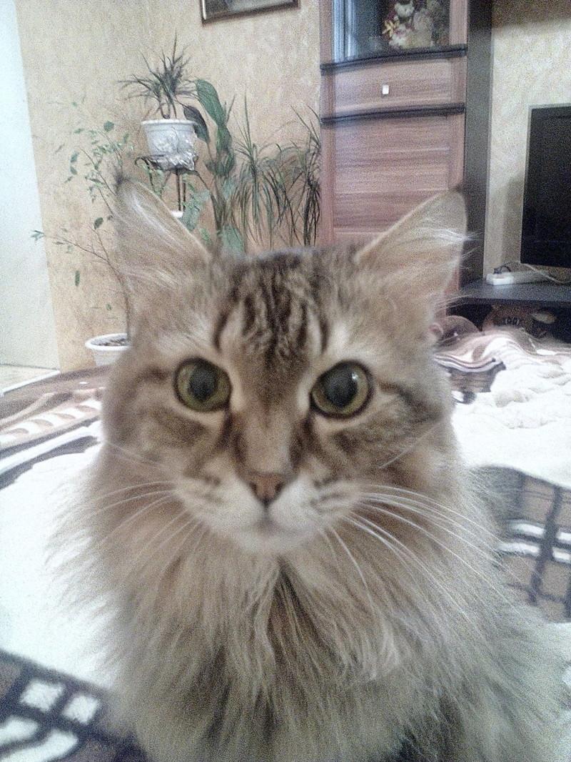 Моя девушка  поставила ультиматум: либо я усыплю моего 21-летнего кота, либо она уходит!