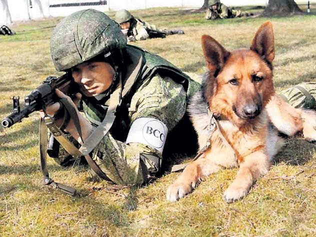На службу в Балтфлот поступили собаки