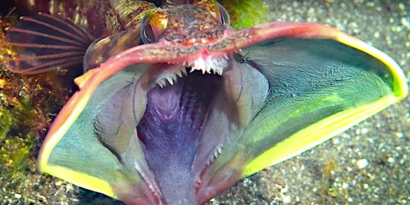 Необычные обитатели морских глубин на снимках рыбака