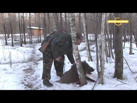Охота на кабана Про охоту и охотников с Валерием Кузенковым